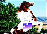 Игра Пазл Конь на свободе