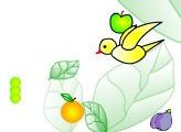 Игра Червяк - пожиратель фруктов.