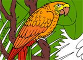 Игра Онлайн раскраска: Попугай Макао