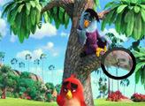 Игра Злые птички: Найди цифры