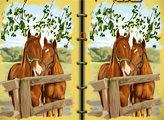 Игра Книга с картинами лошадей - отличия