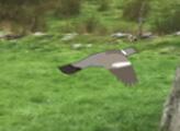 Игра Охота на голубей