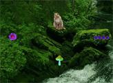 Игра Побег из национального леса Тонгасс