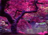 Игра Побег из розового леса