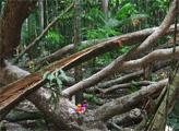 Игра Побег из тропического леса