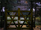 Игра Побег из заброшенной лесной деревушки