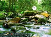 Игра Побег леса Амазонки 2