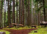Игра Побег с Олимпийского Национального леса