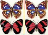 Игра Отличия: Бабочки