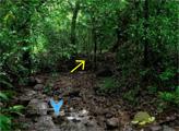 Игра Густой лес