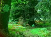 Игра Побег из густого леса Майя