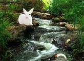 Игра Побег лесного кролика