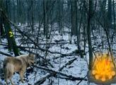 Игра Побег из леса волков