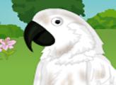 Игра Птичке нужен хозяин