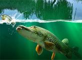 Игра Рыбалка на ивовом озере