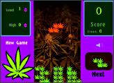 Игра Weed Frenzy